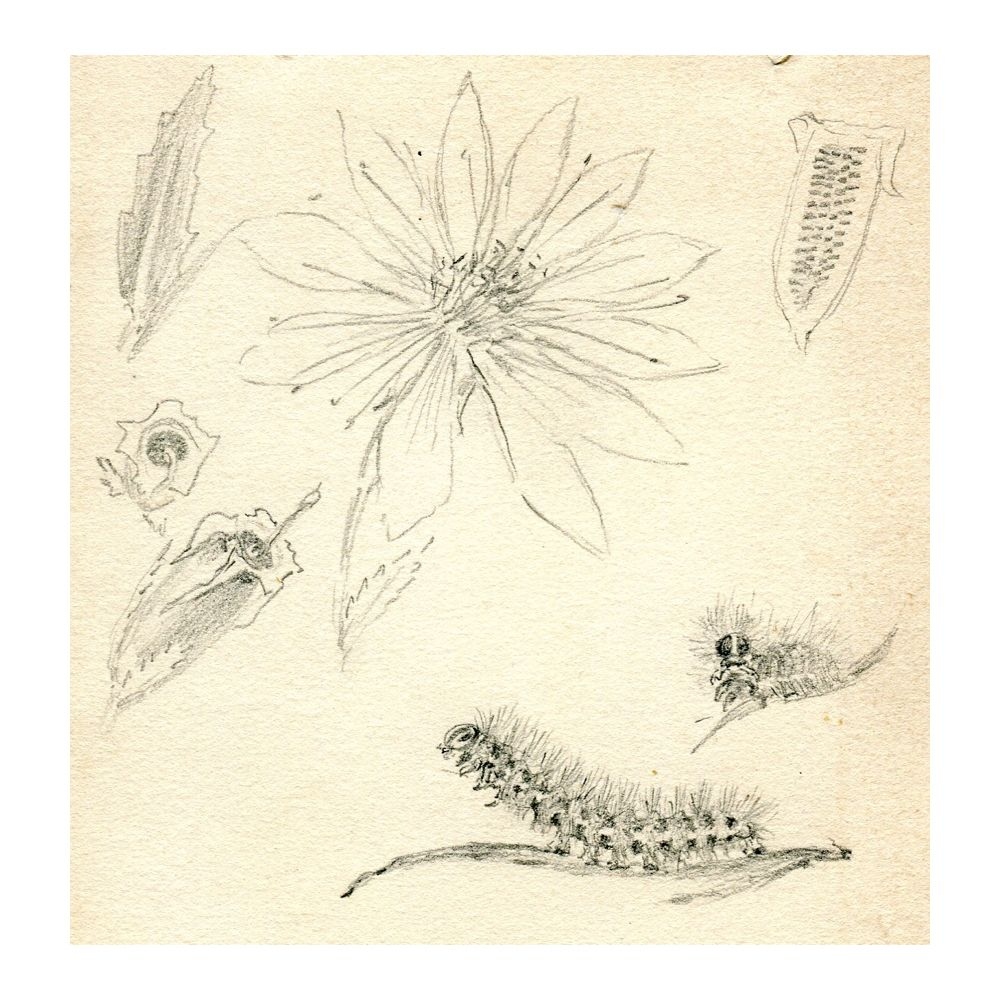 Wilmarth sketch
